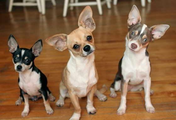 Клички для собак девочек: выбираем правильно и со вкусом