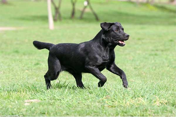 самые красивые собаки,топ 10 пород