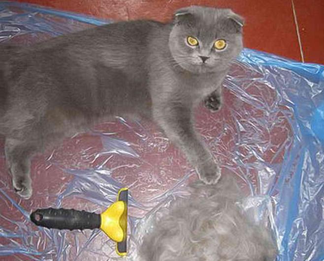 Кошка сильно линяет что делать