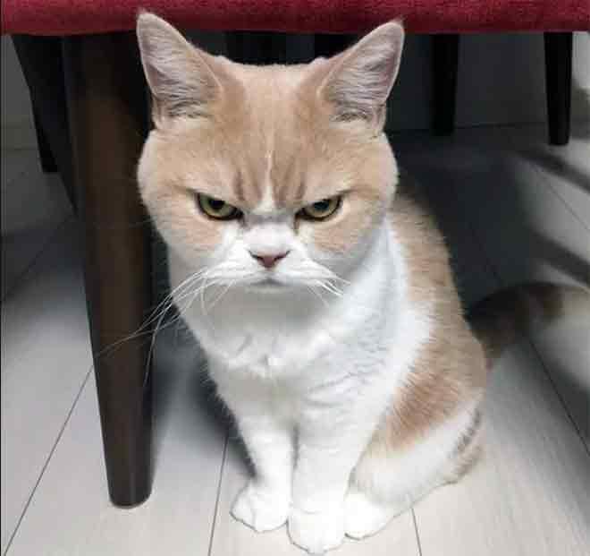 недовольство котов